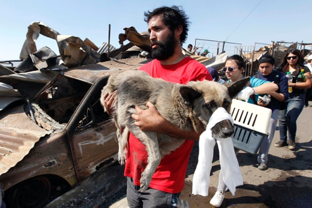 Σώζοντας ένα σκύλο στην Χιλή...