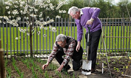 Eric Clayton, kneeling, with volunteer Brian Slack on their allotment at Garforth, Leeds.