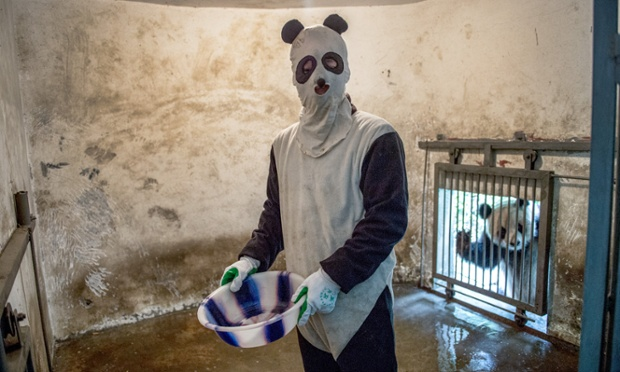 China's Giant Panda Research Center
