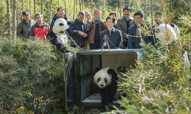 China's Giant Panda Research Center.