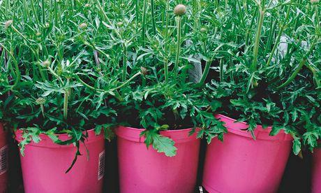 Alys Fowler: garden centres
