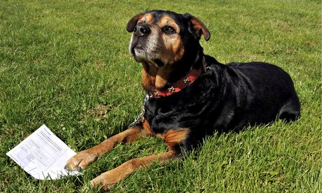 Dog owner faces jail for allegedly registering rottweiler to vote