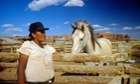 navajo tribe arizona