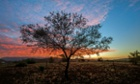 A tree in the outback.