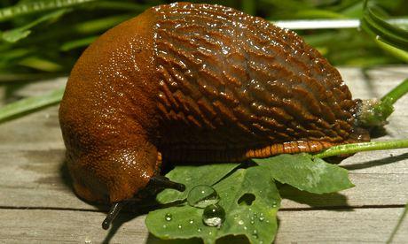 Alys Fowler: slugs