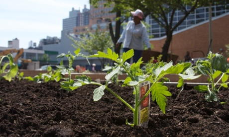 The Garden of Eden community project in Brooklyn, New York.