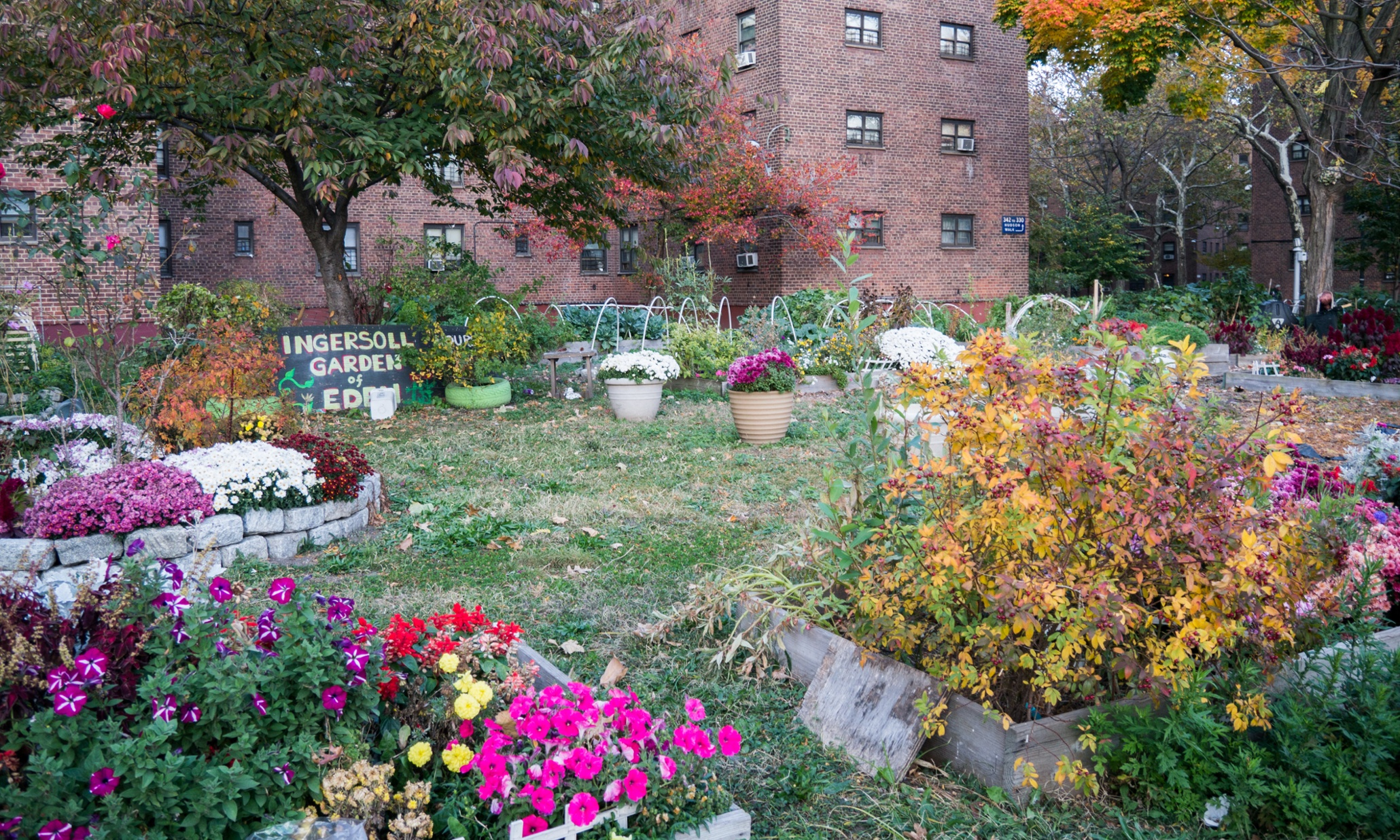New York Success Story Growing The Garden Of Eden In Brooklyn Cities The Guardian