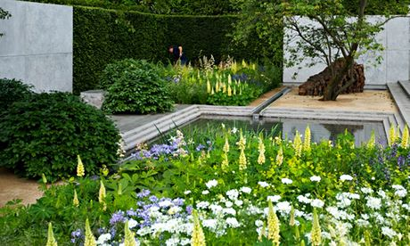 Garden blog: Yellow lupins and Oralya grandiflora