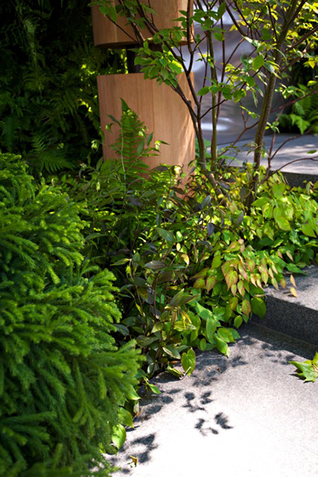 Garden blog: Disporum cantoniense 'Night Heron'