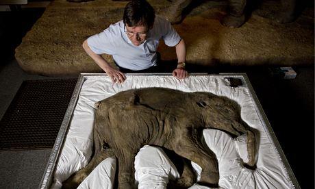 Mammoth researcher Professor Adrian Lister