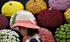 chrysanthemums Chelsea Flower Show