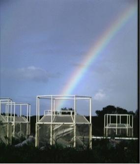 Soil-carbon test locations, Cape Canaveral, Florida. Photo Credit: Bert G. Drake
