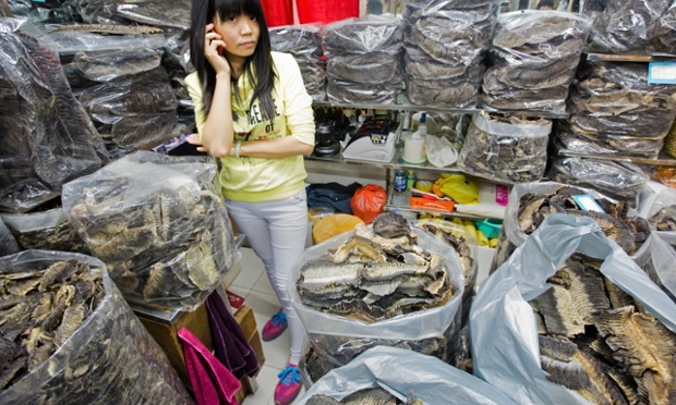 Manta and Mobula gills for sale, the dry seafood markets of Guangzhou, China. In a new report the slaes of manta and mobula gills have increased ten fold, in the last 18 months.