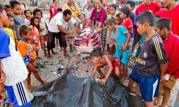 Villagers remove the head off a large mobula ray, before removing it's gills.