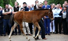 The first foal of Frankel to be auctioned is led around the grounds of Kensington Palace.