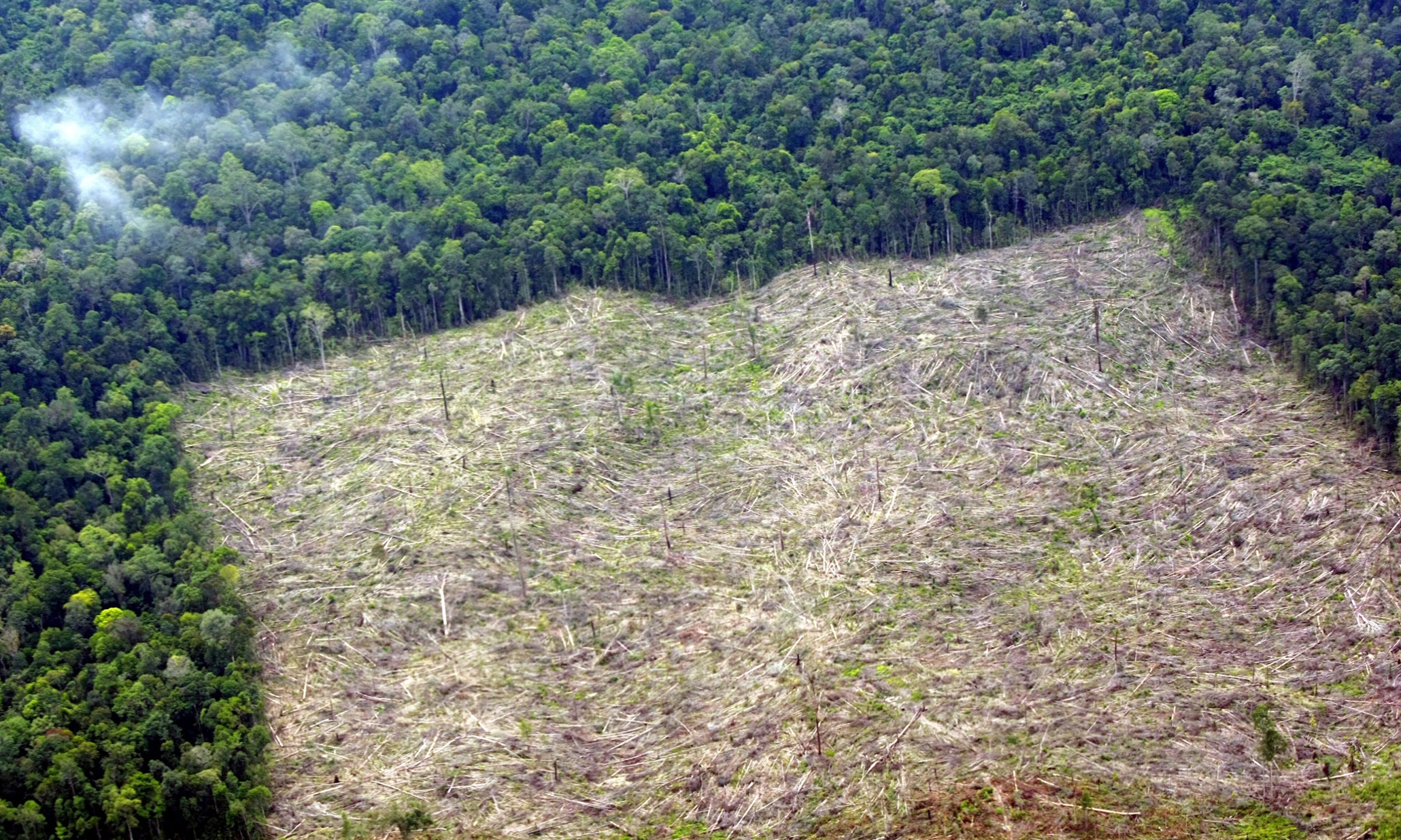 Deforestation Rate in Indonesia images