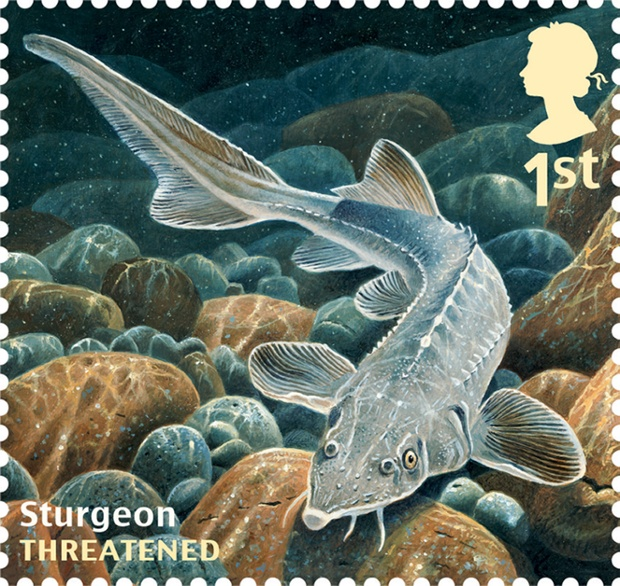 Royal mail sustainable fish special stamps in pictures for Mail order fish