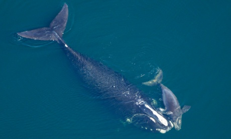 Whales under threat as US approves seismic oil prospecting in Atlantic E7b34c09-c70f-41a8-854d-161455fb9852-460x276
