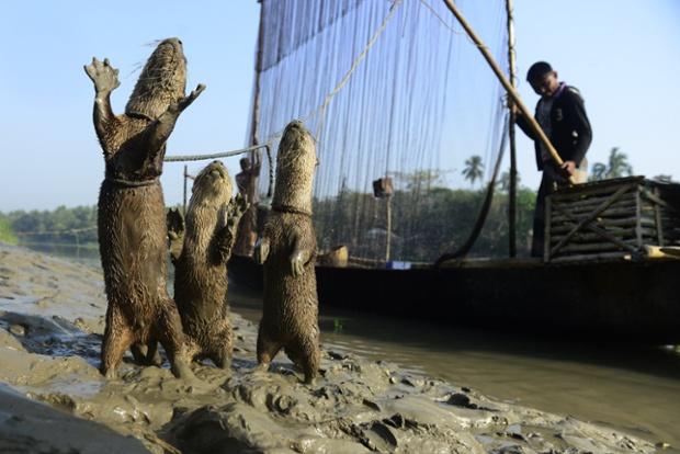 Weird Fishing Lures