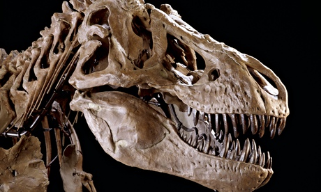 Researchers find first sign that tyrannosaurs hunted in packs