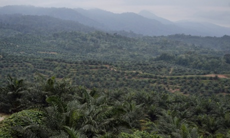 A palm oil plantation in Sumatra. Changes to the World Bank's lending rules could allow such plantations on indigenous peoples' lands, NGOs fear