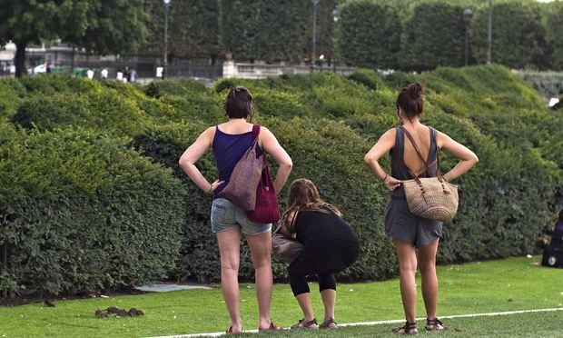 parisian public gardens next to louvre overrun by 39 really big 39 rats world news the guardian. Black Bedroom Furniture Sets. Home Design Ideas