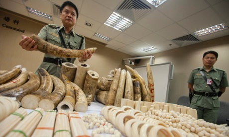 A Hong Kong Customs officer displays seized ivory at the Hong Kong international airport, China, on 10 June 2014.