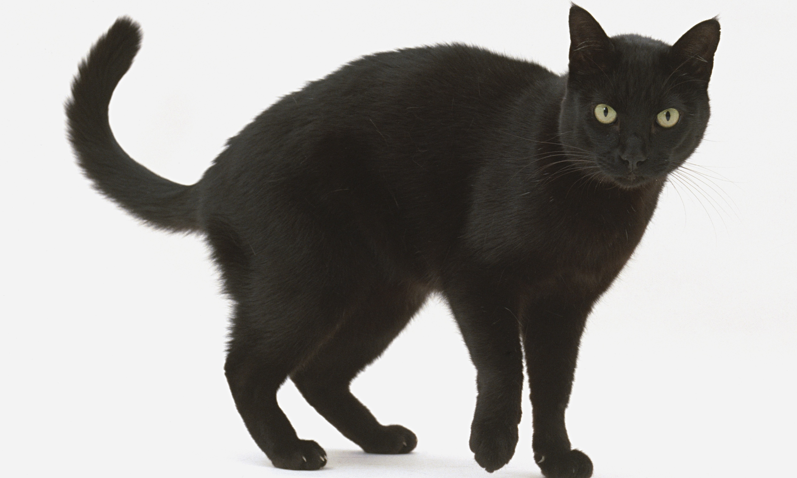 Black-cats-are-being-over-014.jpg