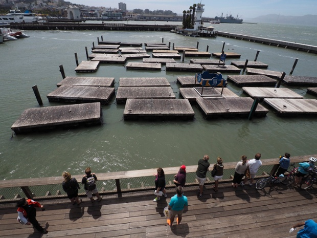 Tourist look at empty docks which were homes to hundreds of sea lions that disappeared from Pier 39 in San Francisco, California, USA, 30 June 2014.  The city's famous colony of sea lions disappeared once before in 2009. Like then, hundreds of sea lions were lying about in the sun, and barking one day, and without notice they were gone the next day. Scientists believe the sea lions went south to breed.