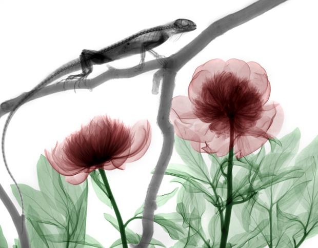 (转载) 彩色X射线拍摄出来的动植物(图) - 及时渔、及时语 - 及时渔的空间