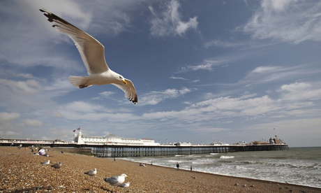 Seagull flying over Brighton beach. Photograph: Davis McCardle/Getty Images
