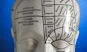 Close up of phrenology head diagram