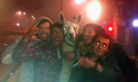 Serge the llama was stolen by youths on a drunken night out in Bordeaux.