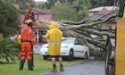 fallen tree Lismore floods