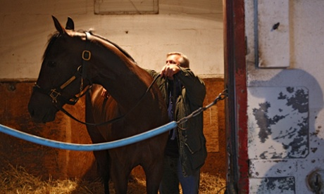 Lasix for horses