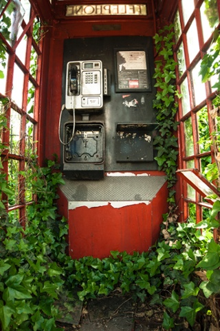 Botanical Britain category winner: 'Green and Red Telephone Box', covered in ivy taken in London by Philip Braude.