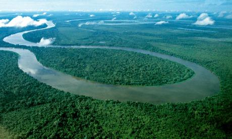 Amazon rainforest 011 - Giant Amazonian 'observation tower'