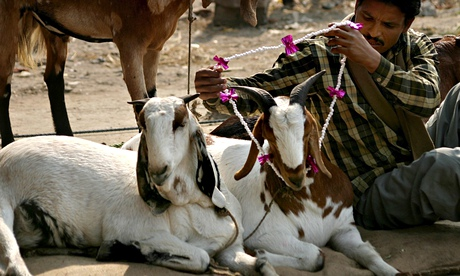 Goat vendor in India