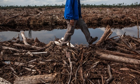UN climate summit pledges to halt the loss of natural forests by 2030