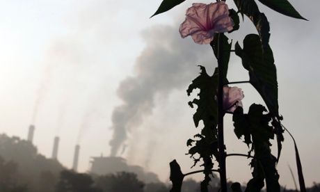 A flower grows close to a thermal power plant on the outskirts of Nagpur.