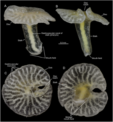 Creatures from Australian coast defy traditional biological classification 197f3634-9d54-4966-9fe2-c08c9a7a1991-389x420