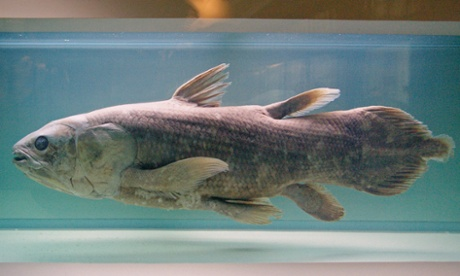 Shelf Life: Six ways to prepare a coelacanth