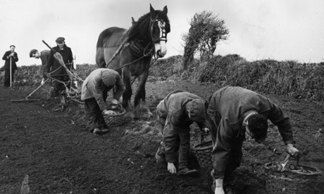 Trials of wartime farming: Country diary 100 years ago