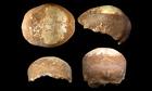 Human skull found western Galilee