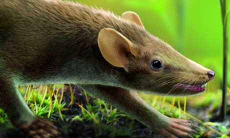Prehistoric rat-like mammal fossil is earliest showing fur, skin and organs
