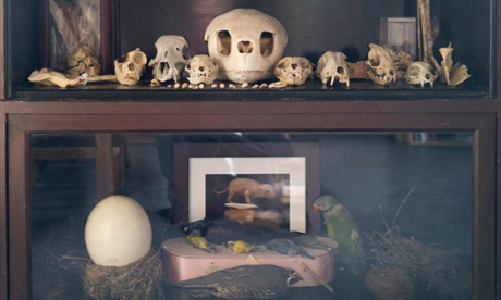 Death becomes it: how the Morbid Anatomy Museum slayed Brooklyn