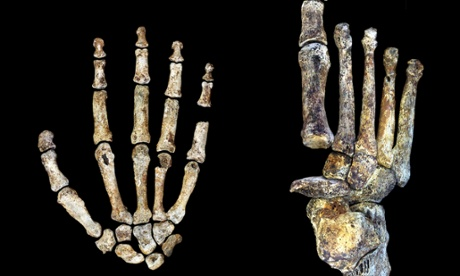 Ancient human relative could walk on two feet, use tools swing in trees
