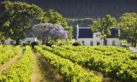 Three wines from New South Africa