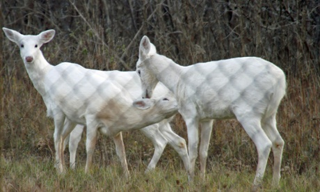 Ghost deer haunt New York cold war bomb site under threat from developers