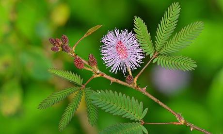 Gardens: do plants think?